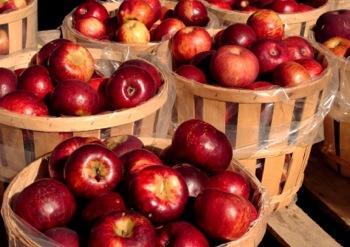 316595 Геокс на страже ваших яблок!