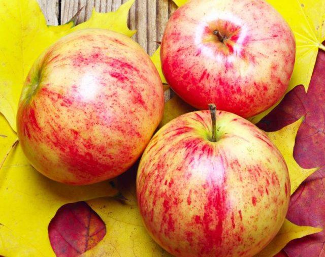 Геокс на страже ваших яблок!