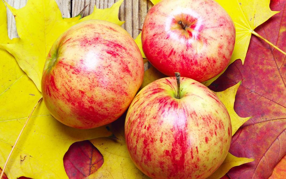 Ap555 Геокс на страже ваших яблок!