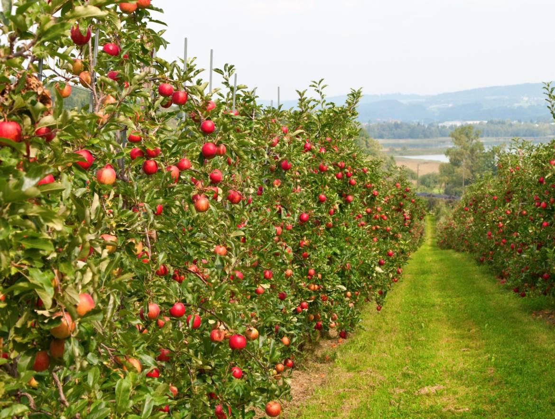 Gal-LutSarCampie-Slide-3-SMALL-1170x882 Геокс на страже ваших яблок!